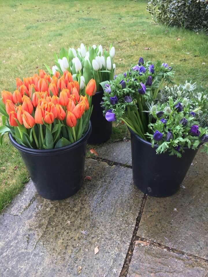 Flower Tulip tubs