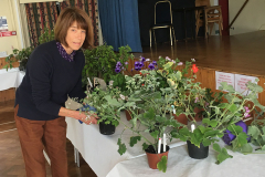 Volunteer-plant-set-up
