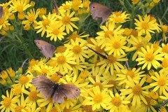 Yellow-Flowers-Butterflies1