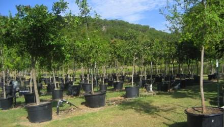 Wyatts Tree & Plant Auction