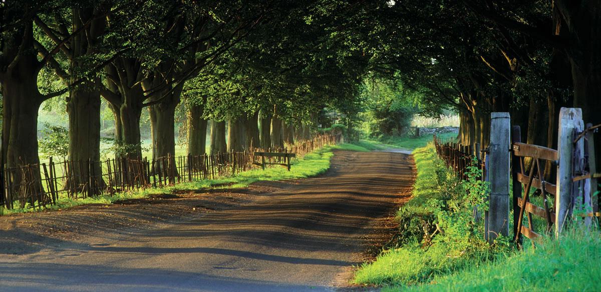 Tree-avenue