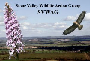 SVWAG-landscapeFI-words
