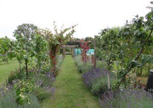 Garden pic